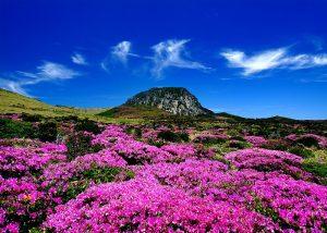 Núi Hallasan du lịch tự túc Jeju