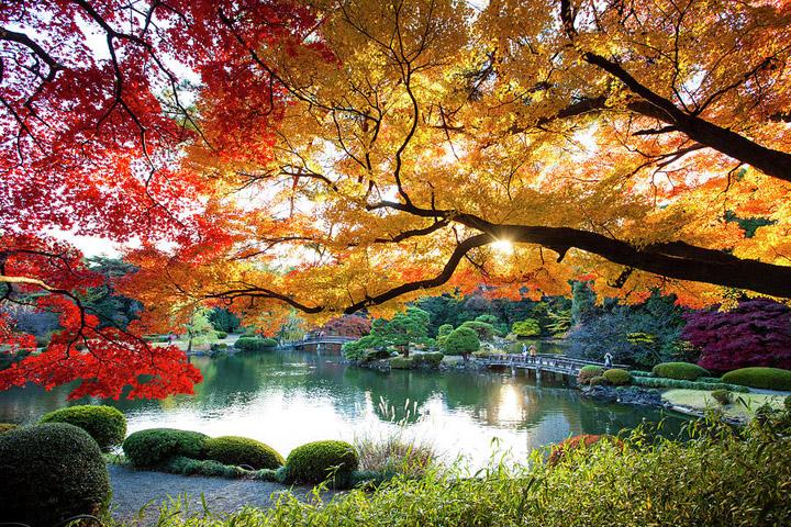 Công viên Quốc gia Shinjuku Gyoen (Tokyo)